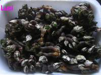 Percebes en GM